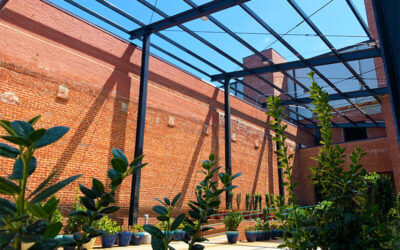Merino Mill and The Epic Journey of Mooresville Developer Michal Bay