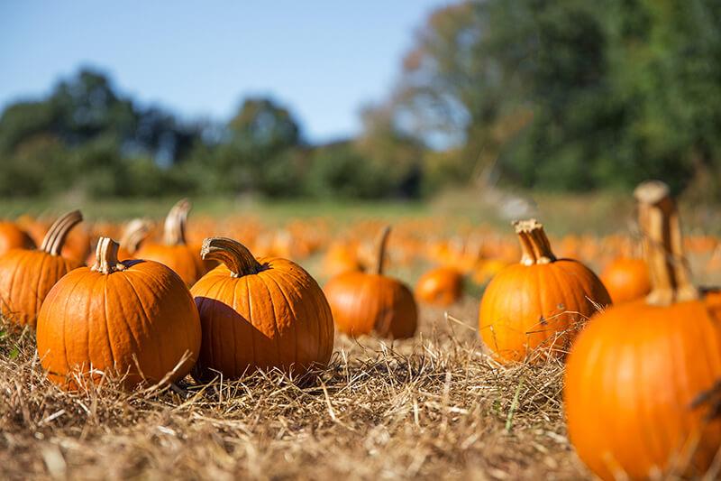 This Season's Best Pumpkin Patches